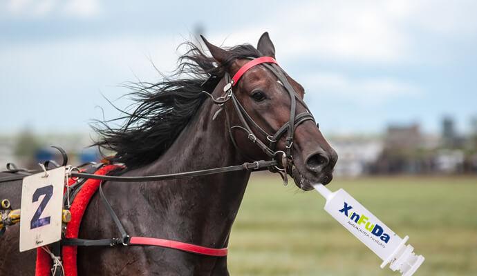 дозирующие шприцы для лошадей